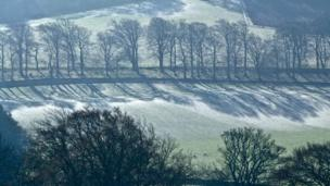Trees and frost on Perthshire hillside