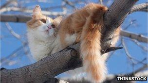 Who, What, Why: How do cats survive falls from great heights? - BBC News