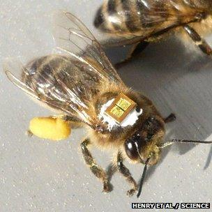 Bee with tag