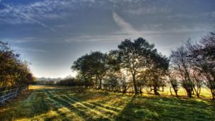 Trees and a field