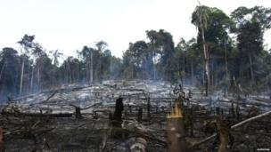 Smouldering forest remains on Awa land
