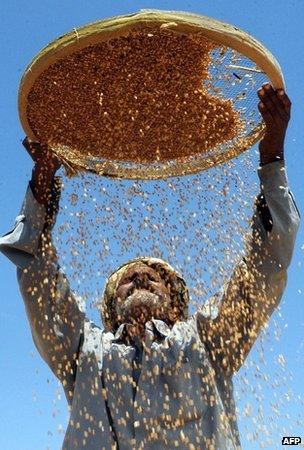 Indian farmer with wheat