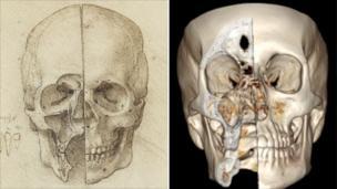 Leonardo da Vinci: How accurate were his anatomy drawings? - BBC News