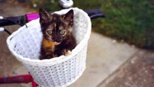 A kitten in a basket
