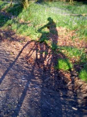 The shadow of a person on a bike while cycling past bluebells