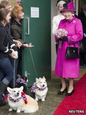 Corgi popularity boosted by Queen's Diamond Jubilee - BBC News