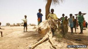 African children with cow carcass