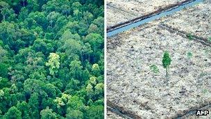 Before and after image of Sumatran forest cleared for palm oil plantation