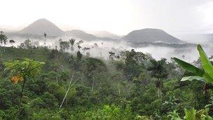 Putumayo jungle