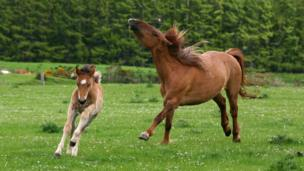 A foal galloping in a field