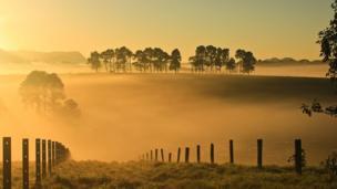 Dorrigo National Park, Australia