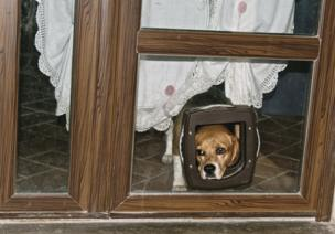 A dog with its head in a cat flap door