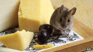 Mouse on cheese board