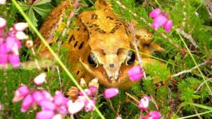 Peter Ward from North Yorkshire took the shot of a frog among the plants at Greshornish peninsula on Skye