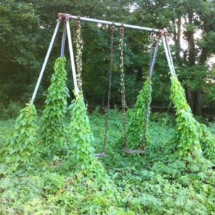 Swings covered in ivy