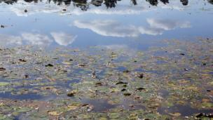Pond with water-lilies and reflection of clouds from sky