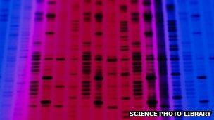 A DNA autoradiogram