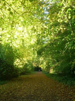 Trees along a path