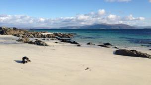 Dog on the beach on the Isle of Iona
