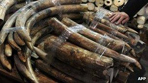 Seized ivory tusks displayed during a press conference in Hong Kong (4 Jan 13)
