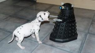 Dalmatian pup and a Dalek