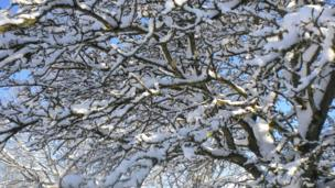 A tree with branches covered in snow.