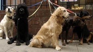 Group of dogs outside a restaurant