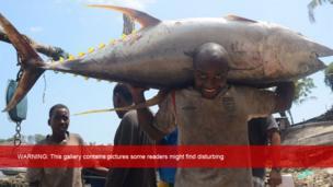 A Kenyan fisherman holding a yellowfin tuna in Mombasa, Kenya