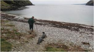 Isle of Man seal pups in Fleshwick Bay