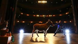 Donkeys on stage