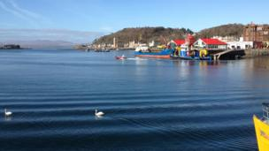 Boats and swans in Oban harbour