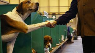 A man shakes the paw of a Foxhound during the first day of the Crufts Dog Show in Birmingham, central England March 7, 2013