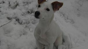 Dog in the snow.