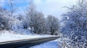 A road and trees with snow.