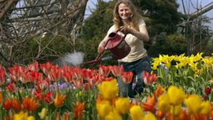 Handout photo issued by the Eden Project of supervisor Catherine Cutler, tending to the array of tulips in the Mediterranean Biomeo at the Eden Project in Cornwall