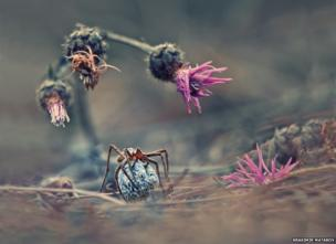 Welcome to the world of the spider by Krasimir Matarov