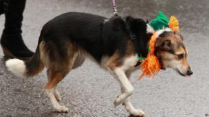 Dog with Oirish hat
