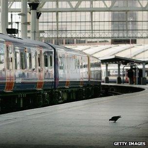 Pigeon on train platform