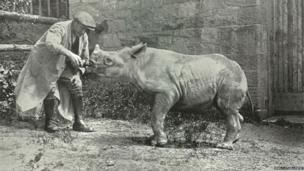 Baby rhinoceros being fed