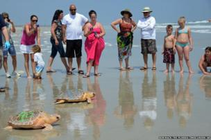 Two Loggerhead turtles are released