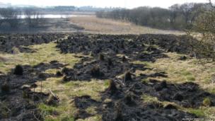 Siddick Ponds Nature Reserve after fire