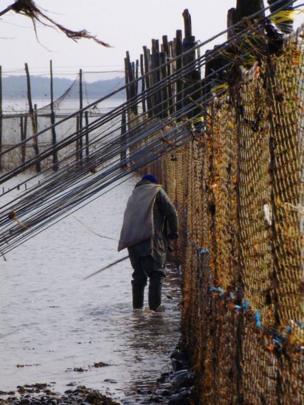 Fisherman clearing fishing nets