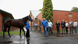 Black Caviar, who is retiring from racing, is paraded in front of the media