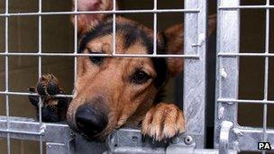 Stray dog in Manchester