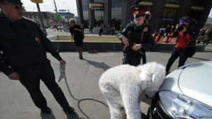 Moscow police detain activist in polar bear outfit (25 April 2013)