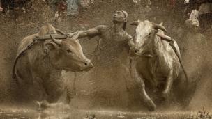 Photo and caption by Fauzan Maududdin/National Geographic Traveler Photo Contest