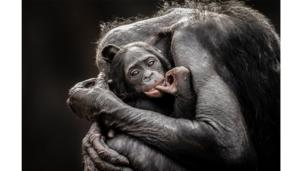 Photo and caption by Graham McGeorge/National Geographic Traveller Photo Contest