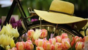 A bicycle makes up part of a display of Dutch tulips
