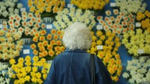 A woman views a display of daffodils at the Harrogate Spring Flower Show