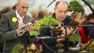 Judges cast their expert eyes over bonsai trees at the Harrogate Spring Flower Show